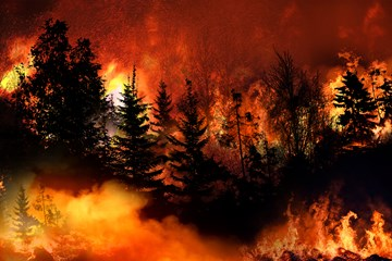 Wildland Fires: A Few Thoughts